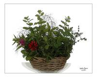 Basket with Tea Herbs