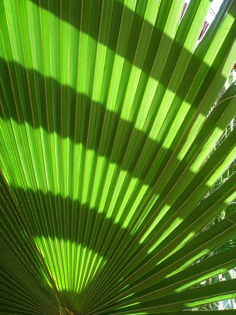 Pattern - Tropical Greenery