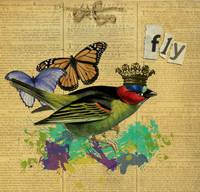 Fly Altered Art Collage