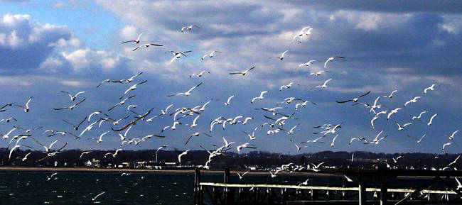 Flight of the Seagulls