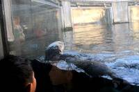 Boy's Sea Otter Experience