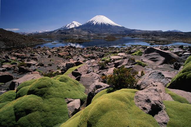Volcan Parinacota and moss