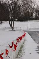 White picket fence with red bows in a wintry scene