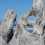 Ocean art prints Blue Sky Driftwood Coastal