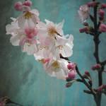 """Flower Art-19"" by Ninas4otos"