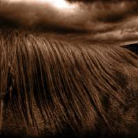 Storm Horse by Jim Westin