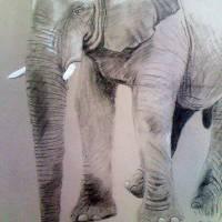 Elephant Art Prints & Posters by Sine Thieme
