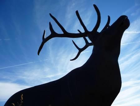 Elk Shadow