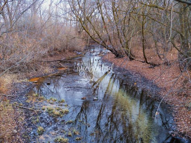 Small Creek - Dry Winter