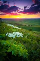 Palouse Flowers