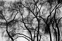 Black and White Silhouetted Trees