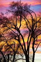 Colorful Silhouetted Trees 13
