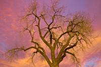 Colorful Silhouetted Trees 16