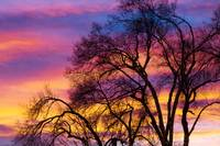 Colorful Silhouetted Trees 25