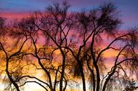 Colorful Silhouetted Trees 26