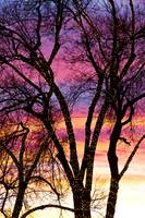 Colorful Silhouetted Trees 33