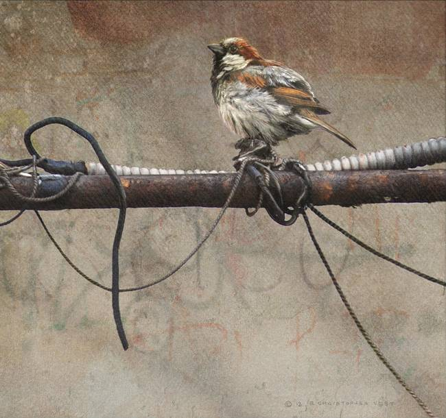 cast offs / old wire and house sparrow by R Christopher Vest