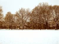 Winter in Wilhelmina Park