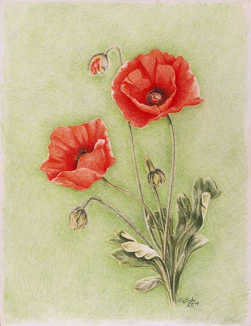 Stunning poppy colored pencil drawings and illustrations for sale poppy mon espoir by dominiquee 1999 mightylinksfo Image collections