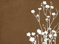 Buttercups in Brown & White