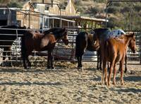 Horses at Spur Cross