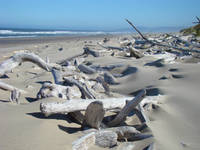 Coastal Driftwood art prints Ocean Sands