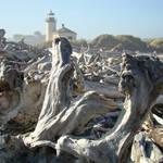 Lighthouse Bandon Oregon prints Coastal Driftwood