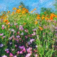 Roadside Wildflowers Art Prints & Posters by James Sybrant