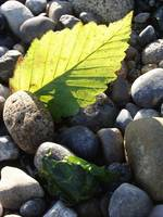 leaf_on_a_beach