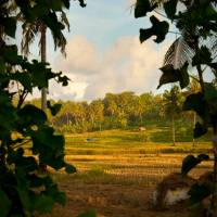 Picturesque Rice Paddy by Jen Wheeler
