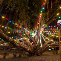 """Lahaina Banyan Tree at Christmas"" by RobDeCamp"