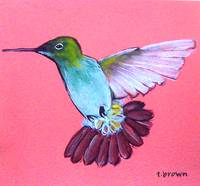 hummingbird - henrietta by tracie brown