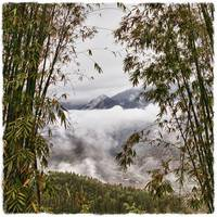 Bamboo Over Mountains