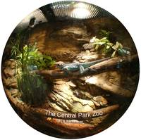 NYC CENTRAL PARK ZOO Lizard Fisheye view