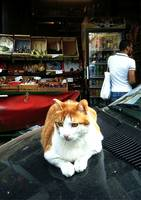 Cat at a Parisian Market