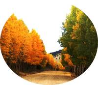 autumn aspens lane circle