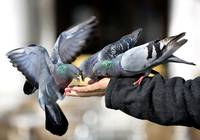Feeding Pigeons in Venice, Italy