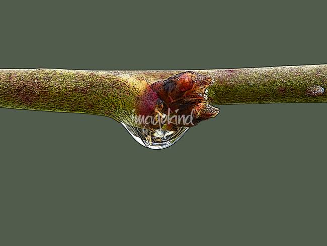 Raindrop on a Small Branch