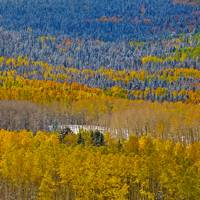 Aspens in Autumn Art Prints & Posters by Barbara Magnuson & Larry Kimball