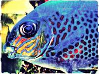 Blue Tropical Fish Art Work