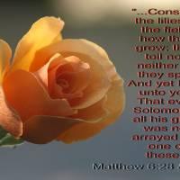 Matthew 6:28 & 29 by Richard Thomas