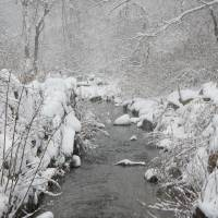 Brewster Herring Run In The Winter Art Prints & Posters by Jose Cruz