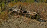 Driftwood In HDR
