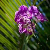 Orchid by Jen Wheeler