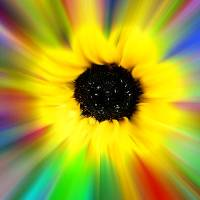 rainbow sunflower Art Prints & Posters by susan k