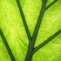 leaf 7 by Laura Troy