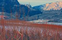 trees and okanagan valley