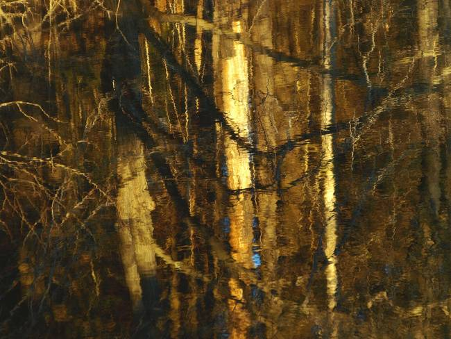 Late Day Swamp Wood Reflections