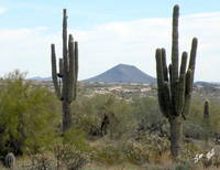 Sonoran Desert of AZ