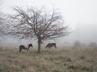Two Horses Under a Tree